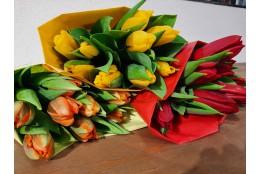 Bund Tulpen