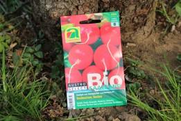 Radieschen Saatband Bio